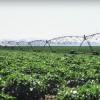 Produce Update--4/18